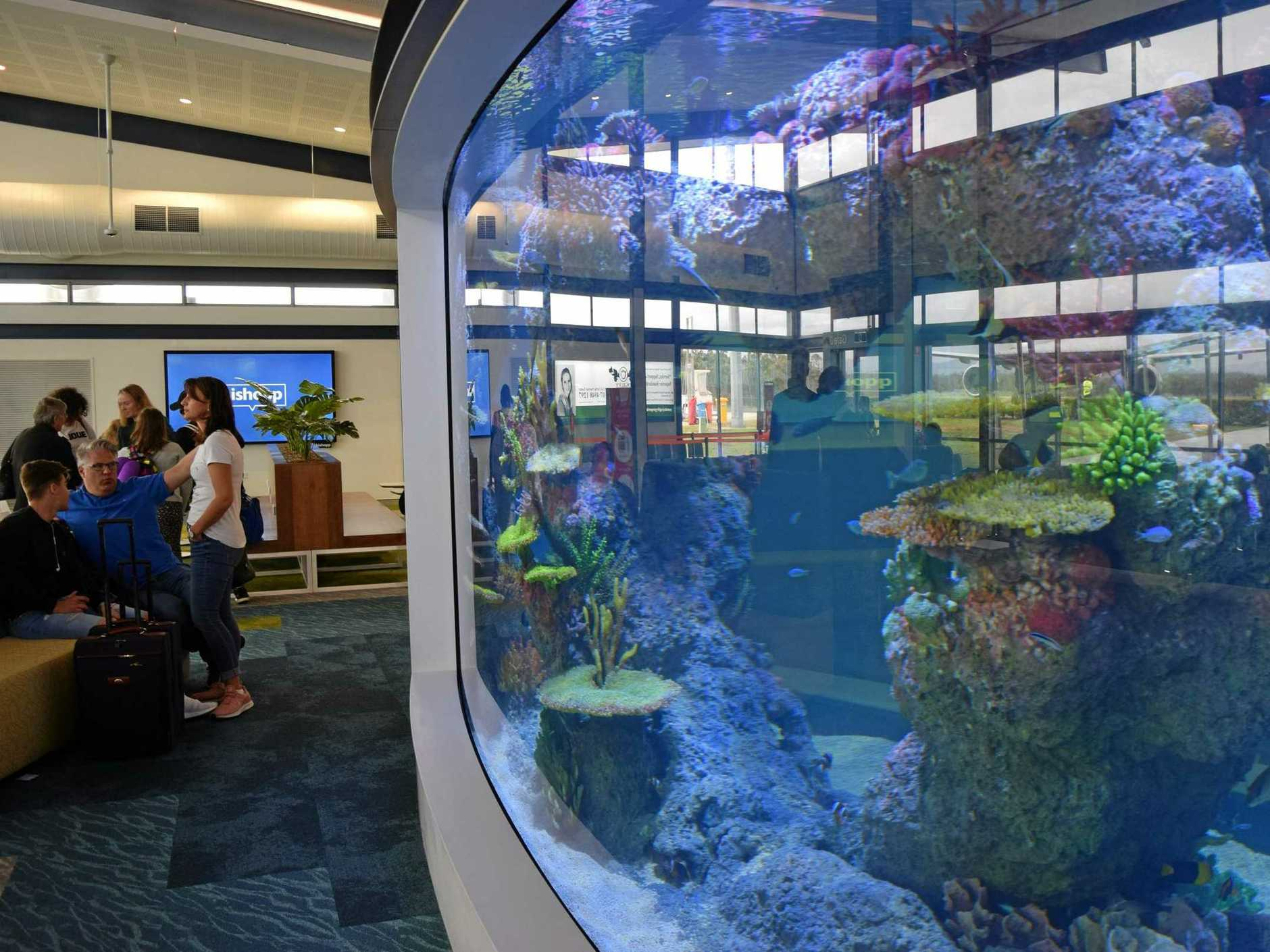 FISH: A sneak peak at the new aquarium, part of the Whitsunday Airport's $15 million terminal expansion.