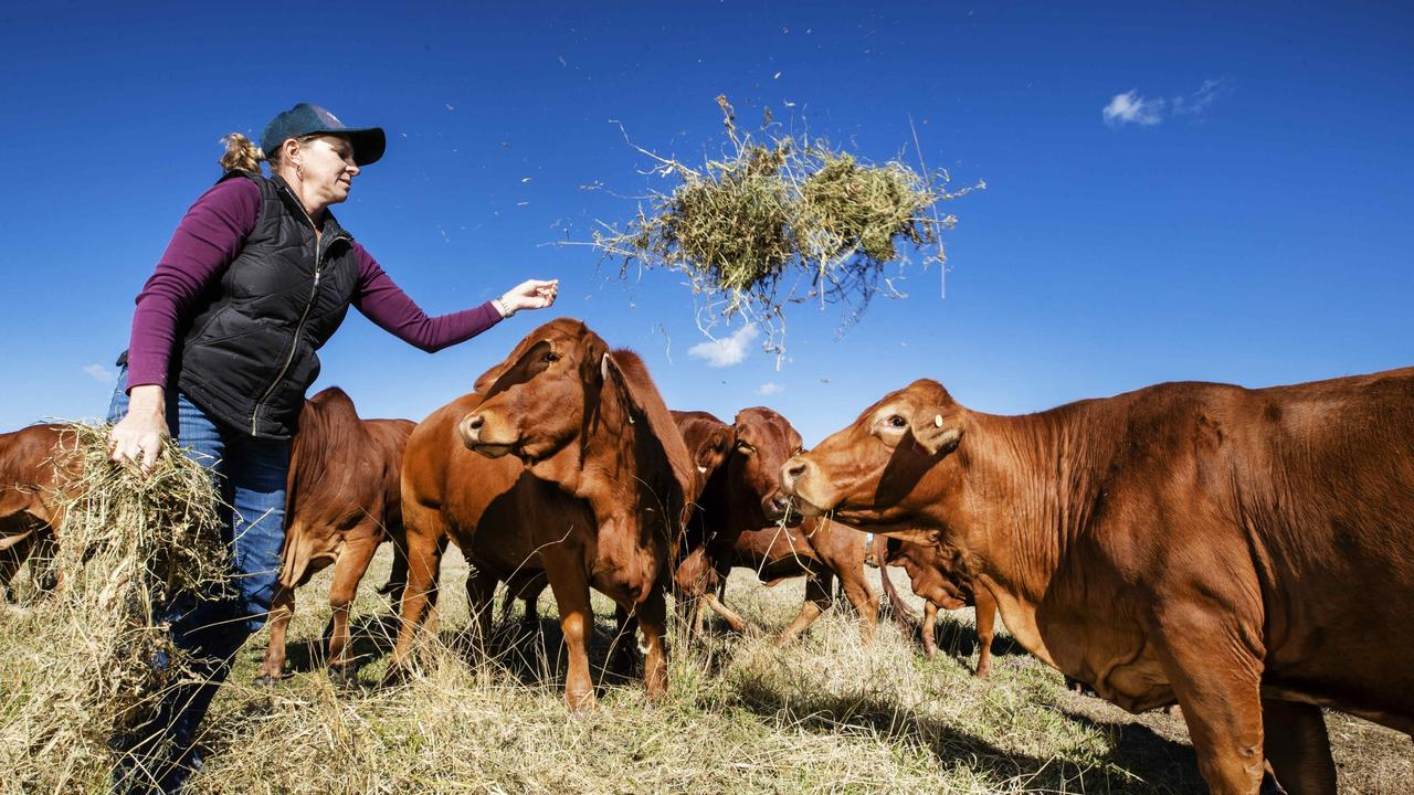 Colleen Smith feeding the cattle. Picture: Lachie Millard