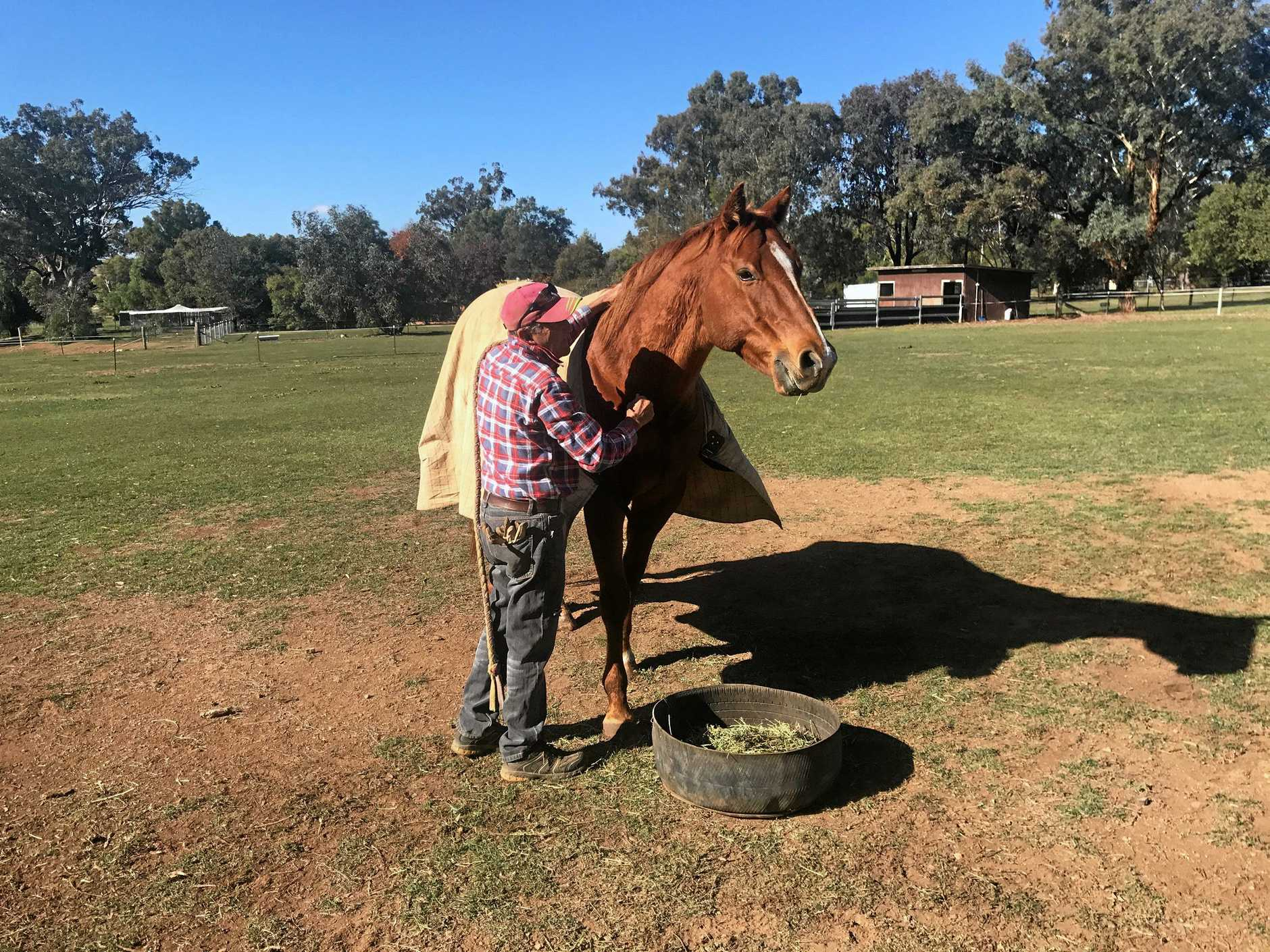 Paul St Vincent and a rugged-up Henry (The Jackal) in Tamworth on a cold and sunny morning. INSET: Robert Thompson drives The Jackal home to win a second Ramornie Handicap.