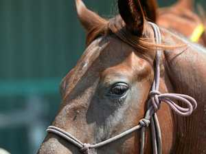 Police on the hunt for suspected horse thief