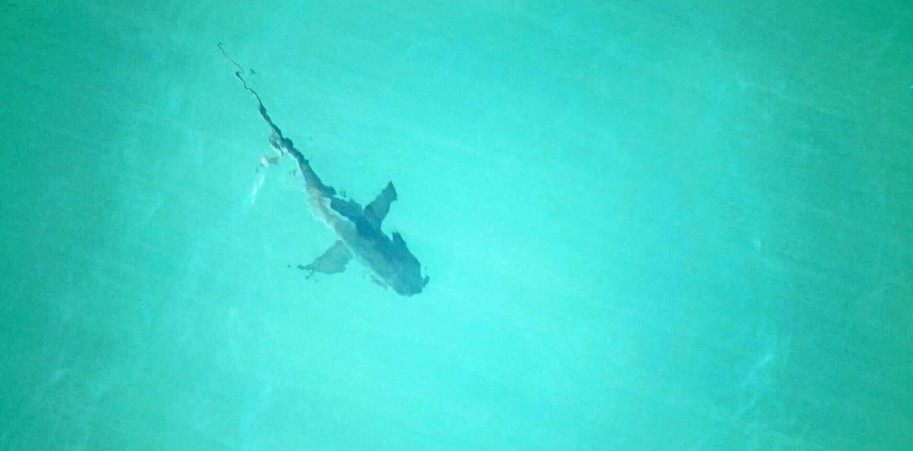 FILE PHOTO: A stand up paddle boarder says he was bitten by a shark off Pelican Waters this morning.