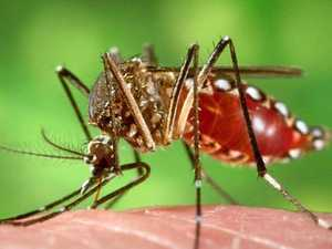 Message for Gladstone as Dengue fever cases rise