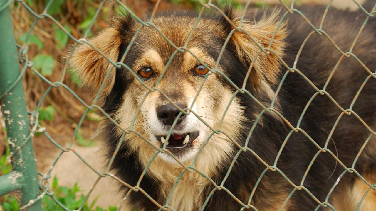 Dangerous dogs will be targeted in the proposed crackdown.