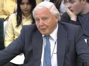 David Attenborough testifies on the Great Barrier Reef