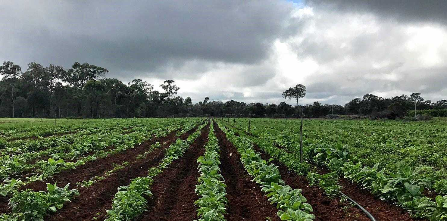 IN COURT: A man has been sentenced over the huge seizure of illegal tobacco near Bundaberg.