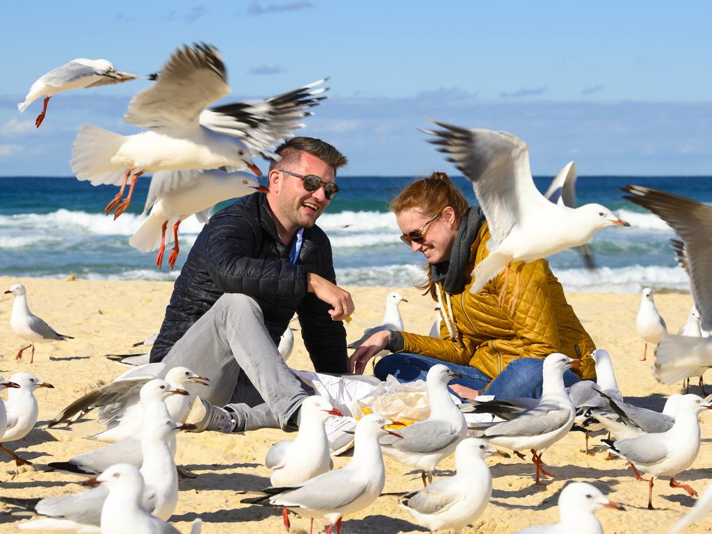 Andreas Rakers, 31, and his wife Kerstin Rakers, 30, try to eat fish and chips at Bondi. Picture: Darren Leigh Roberts