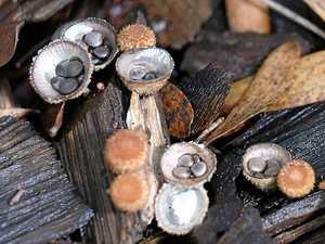 Blown away with Noosa's fungi 'fantastic'