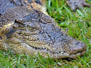 Crocodiles on the agenda at LNP State Convention