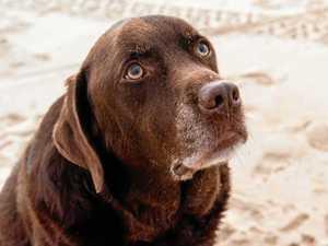 METH LAB: Family's warning, my dog was high on ice