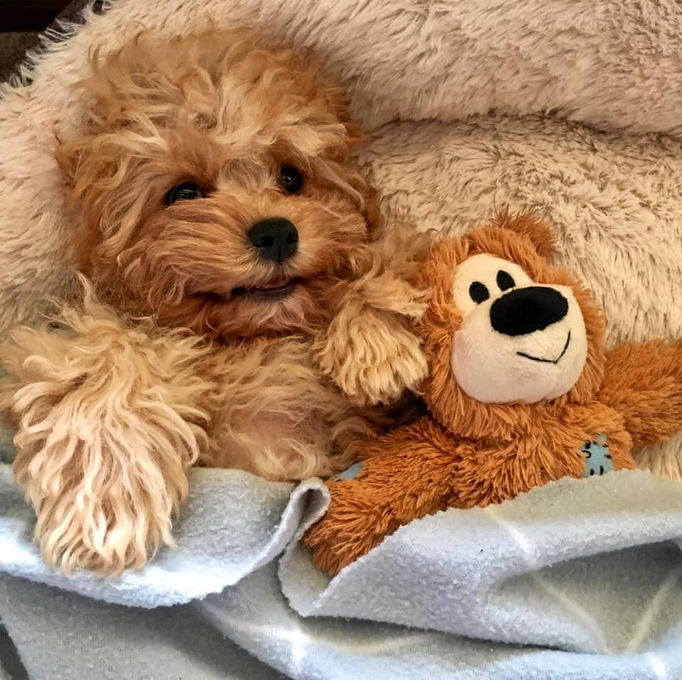Teddy snuggling up with her teddy ??.