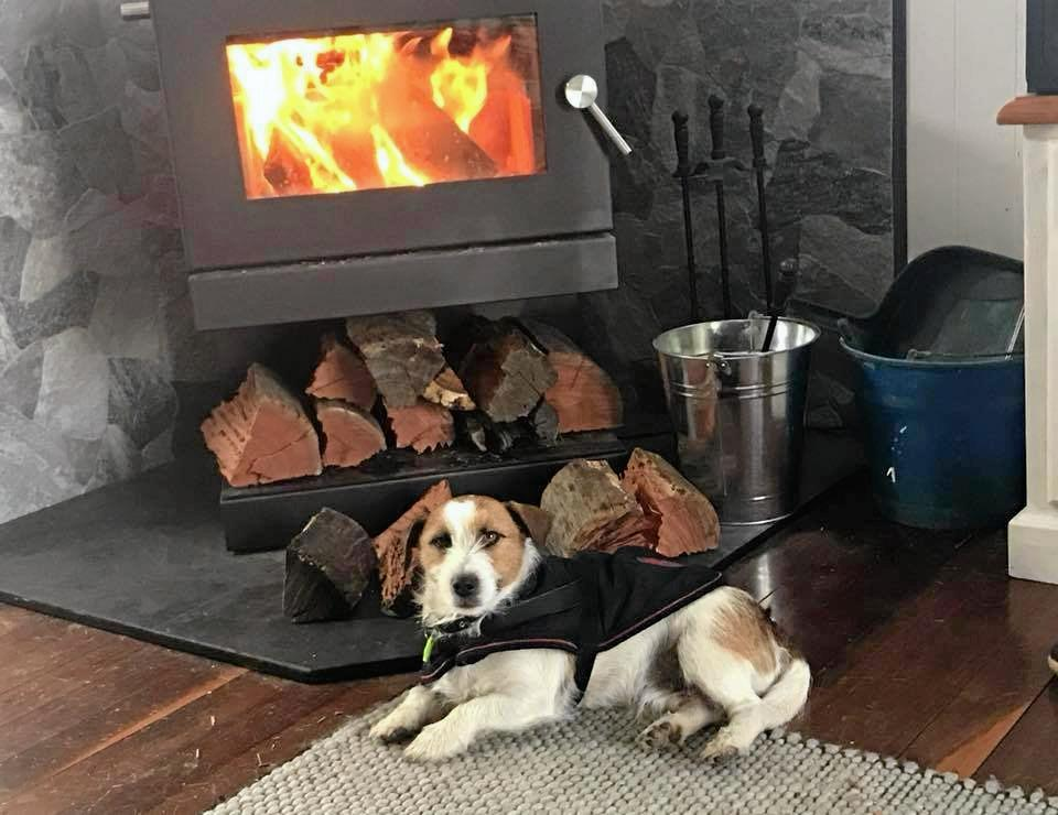 This is 'Buddy'. Our best buddy keeping warm this winter!