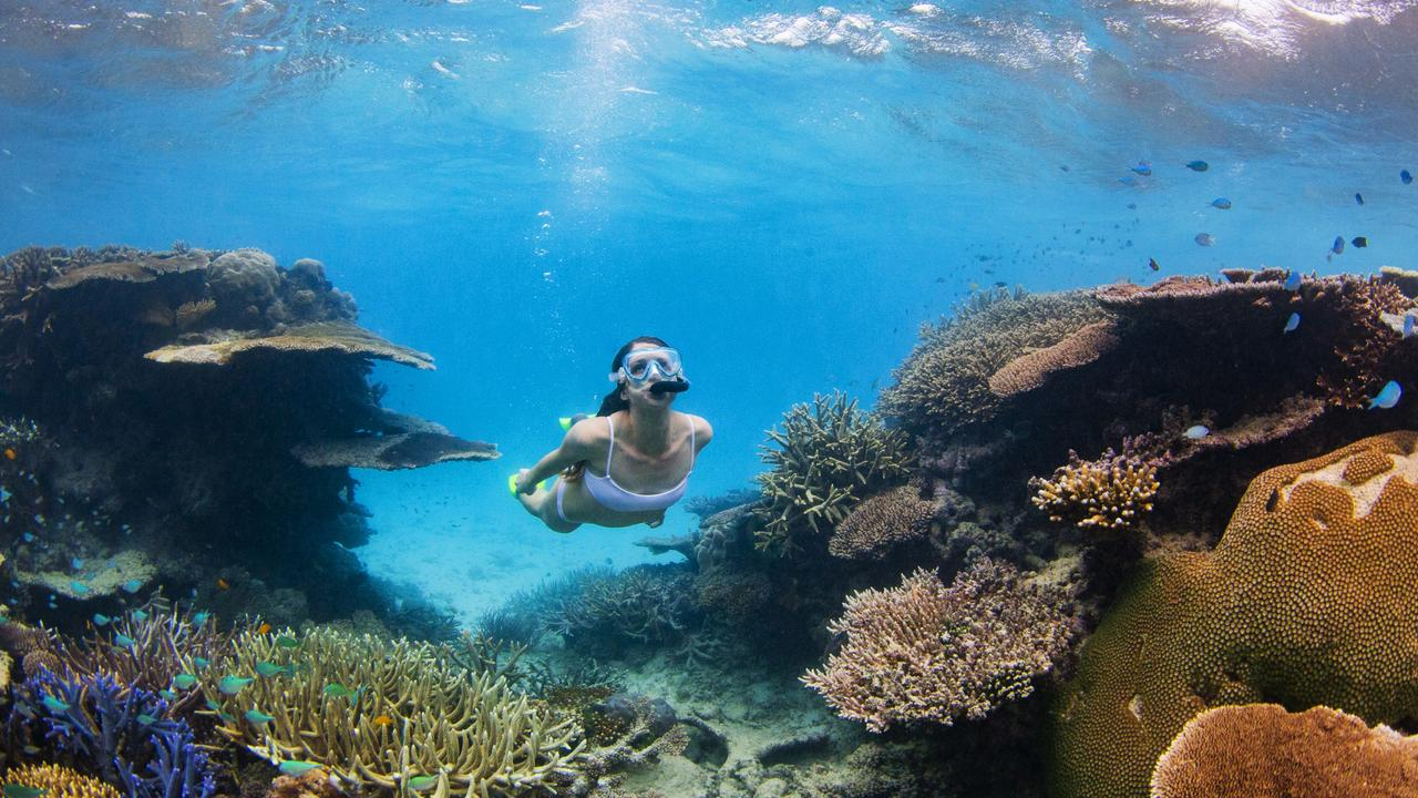 Saskia English, 24, from Sydney explores Walker Reef on the outer Great Barrier Reef northeast of the Palm Island. Picture: Lachie Millard