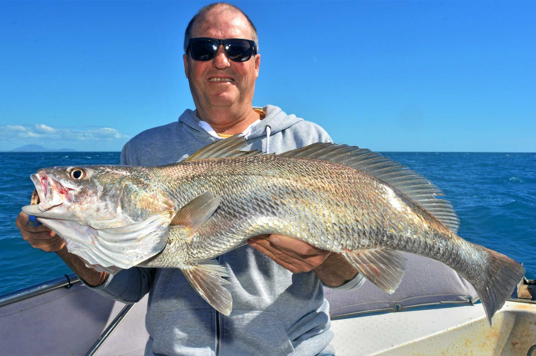 LANDED: Dave Cronan with one of many nice black jewfish that have been coming up from the depths while out on the water with Reel Addiction Sport Fishing Charters.