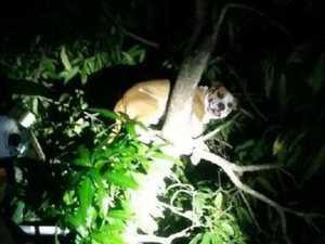 Fireys rescue possum-friendly dog