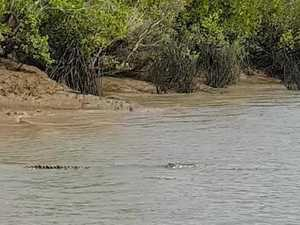 Crocodile spotted in Gladstone waters