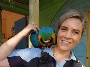 Missing Macaw found, investigations continue