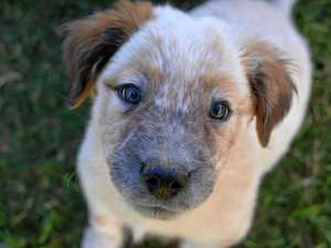 New animal rescue group forms after RSPCA closure