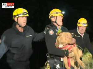 Couple fall down steep cliff trying to rescue runaway dog