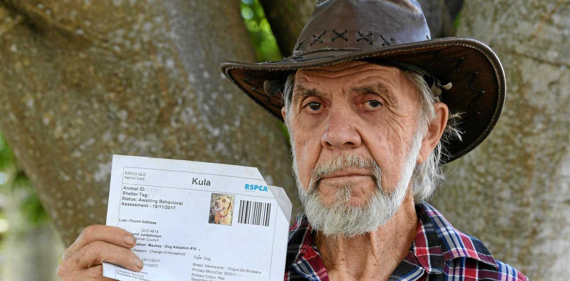 Syd Miels, from Plane Creek, believes his eight-and-a-half-year-old Weimaraner dog Kula died after eating 1080 baits.