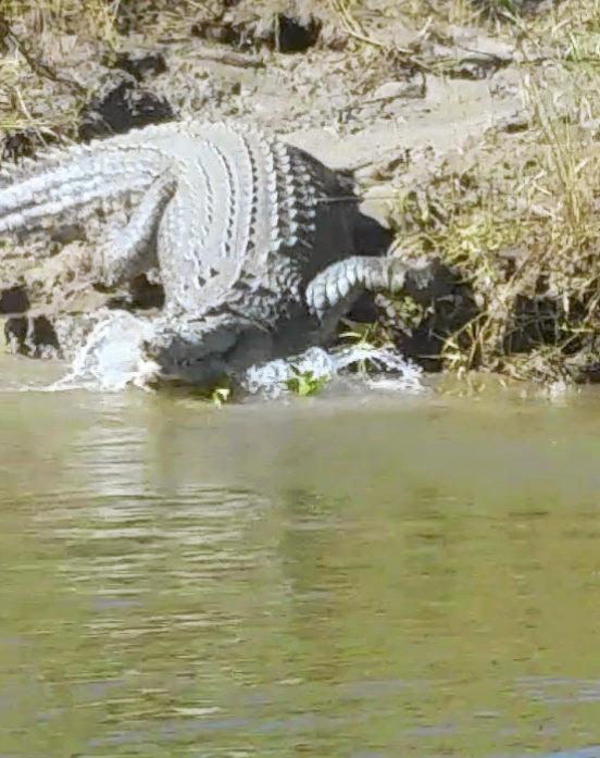 Croc photos