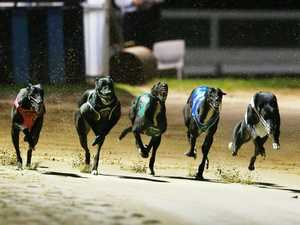 Trainer's illegal plot to beat rival dogs