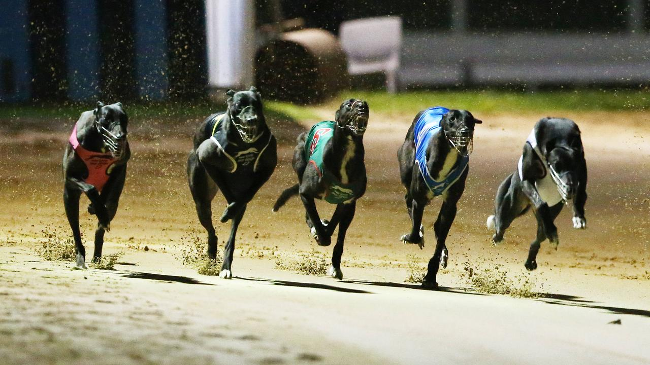 A former greyhound trainer planned to drug rival dogs so his own would win.