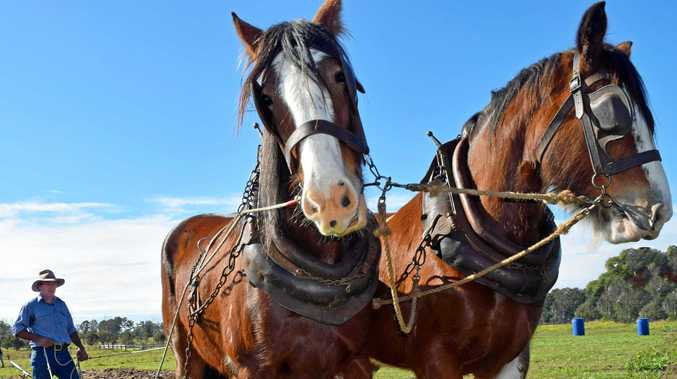 Heavy horses, tractor games, dog trial at big weekend