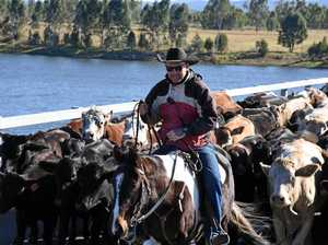 Droving on the rise as the grass dies