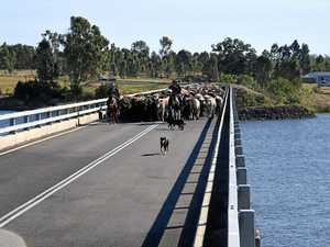 Droving across Mingo Crossing Bridge