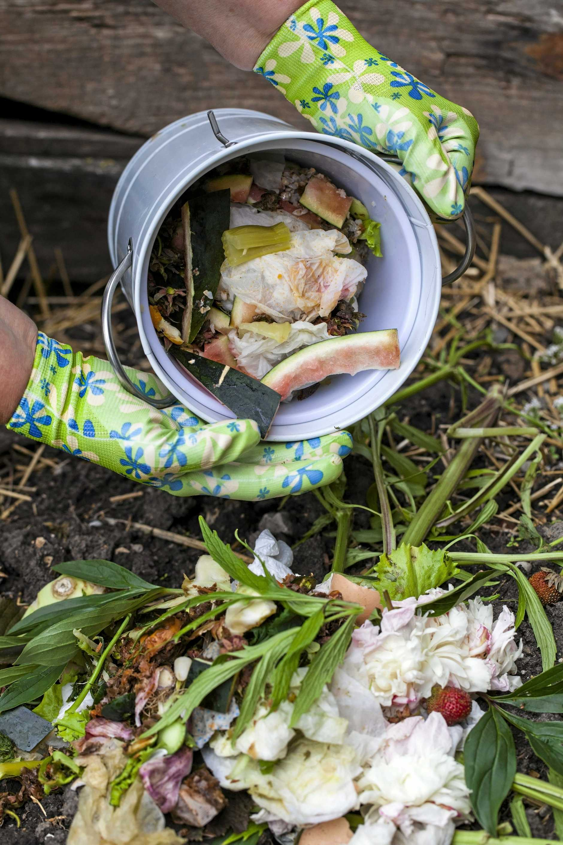 Woman pouring vegetable peels and organic waste to the compost bin.