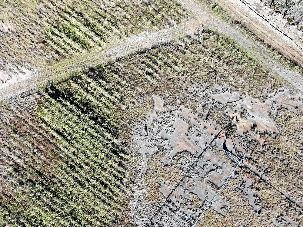 DEVASTATING: Salt damaged cane land near Kinchant Dam.