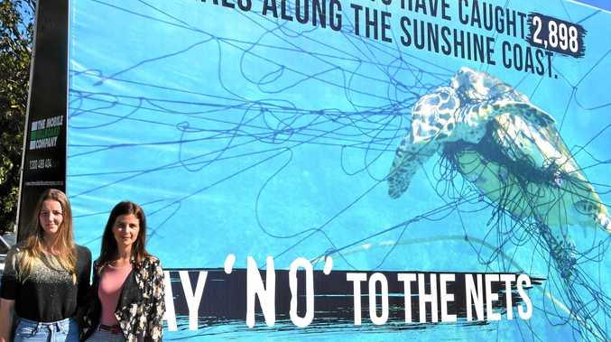 Activists hit street to campaign against 'deadly' shark nets