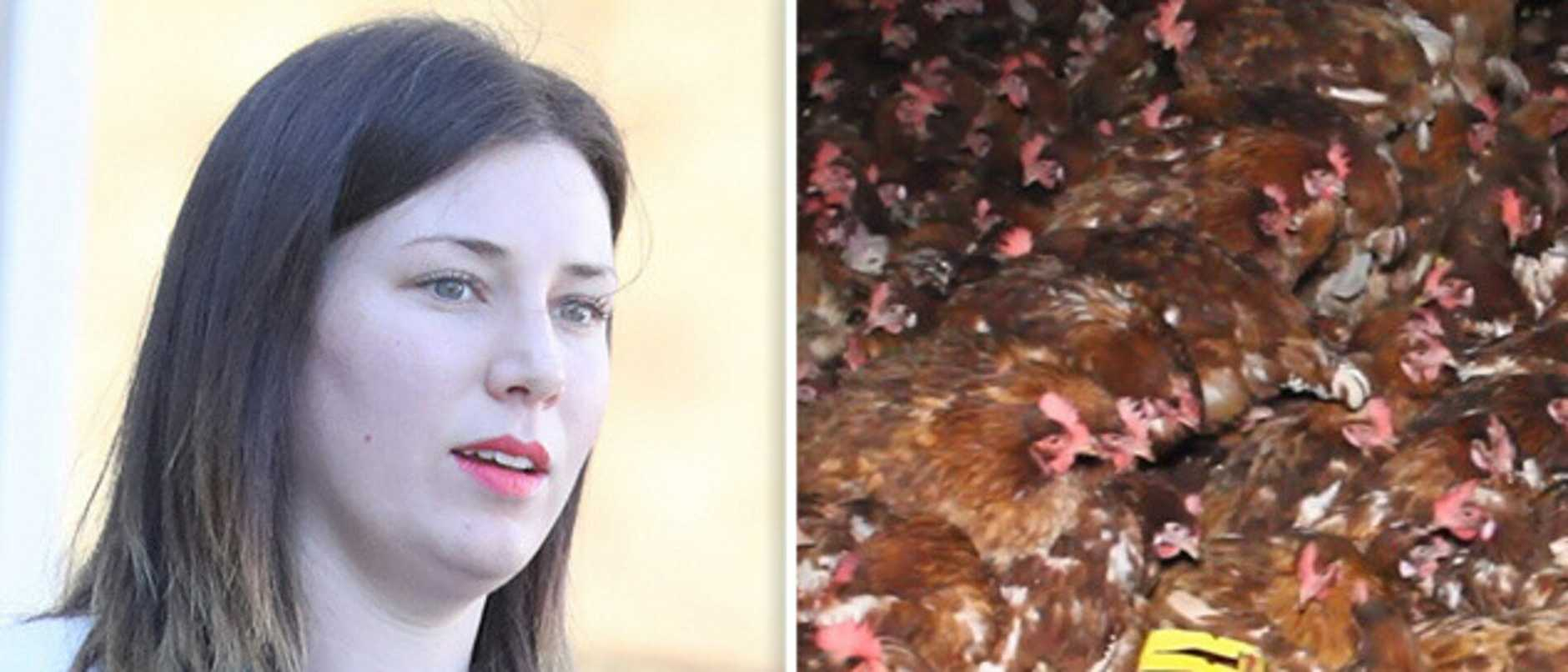 Animal activists who broke into a chicken farm are facing court.