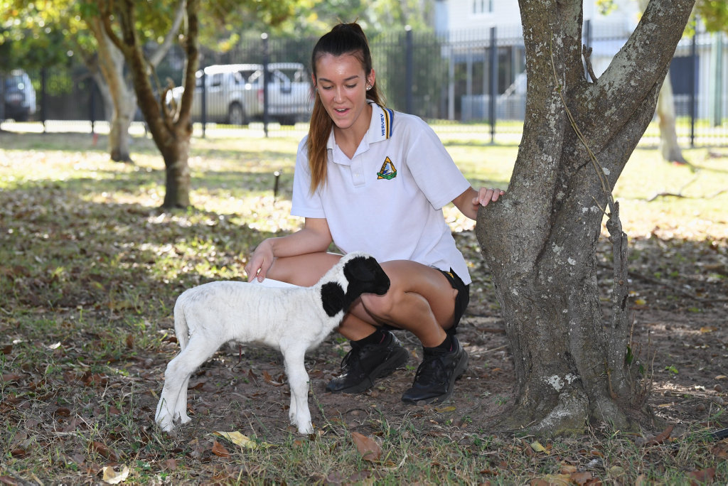 Hervey Bay High School agriculture department - Year 10 student Talia Nesbitt and new born lamb.