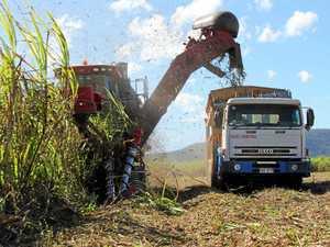 Proserpine sugar industry backs action against India