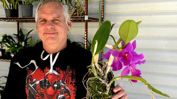 Orchid lover sells potted friends on to next collector