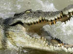 Crack-odiles! Do NT crocs have a drug problem?