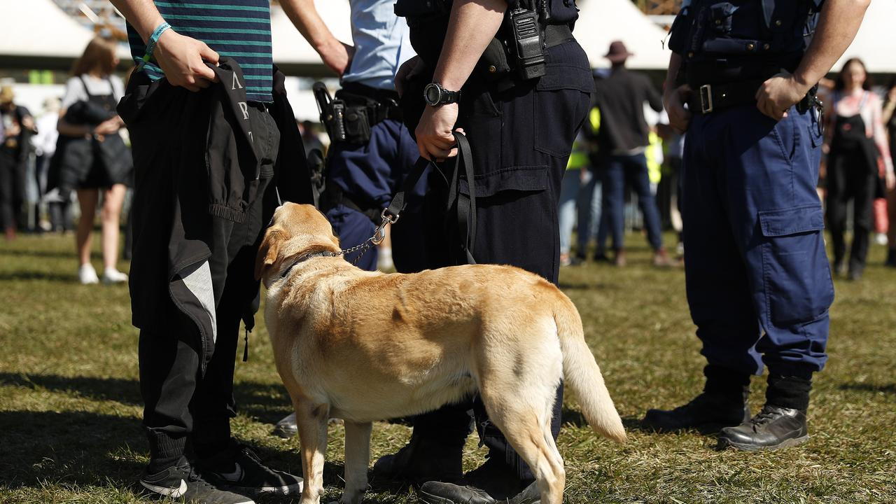 Police officers and drug detection dogs were seen wandering among festival-goers. Picture: Mark Metcalfe/Getty Images