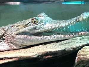 Crocodile and snakes stolen from zoo