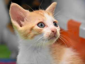 ADOPT A CAT: Kittens who need a new home