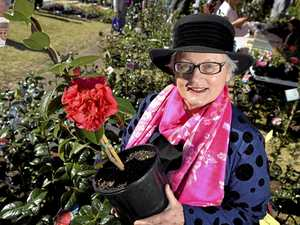 Camellia show brightens winter
