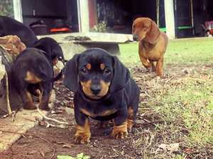 Best dogs of the South Burnett