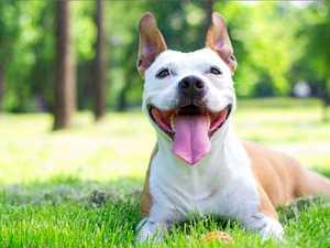 PHOTOS: 50 of the South Burnett's cutest dogs