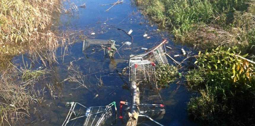 EYESORE: Dumped shopping trolleys in the Clarence River in Grafton.