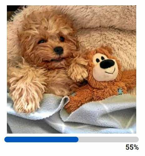 Teddy's poll winning picture with the results below it.