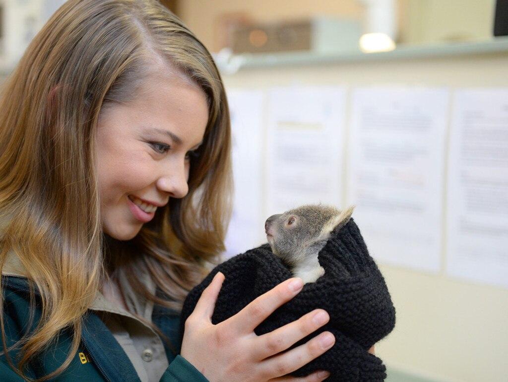 Making friends! Bindi nurses a baby koala.