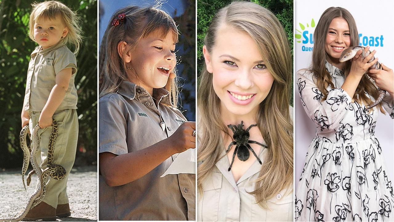 art for bindi irwin story