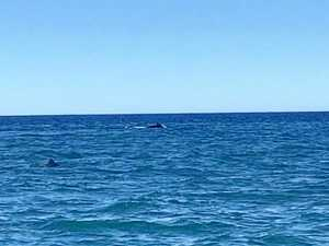 WHALE HELLO THERE: Dolphins, whale spotted off 1770