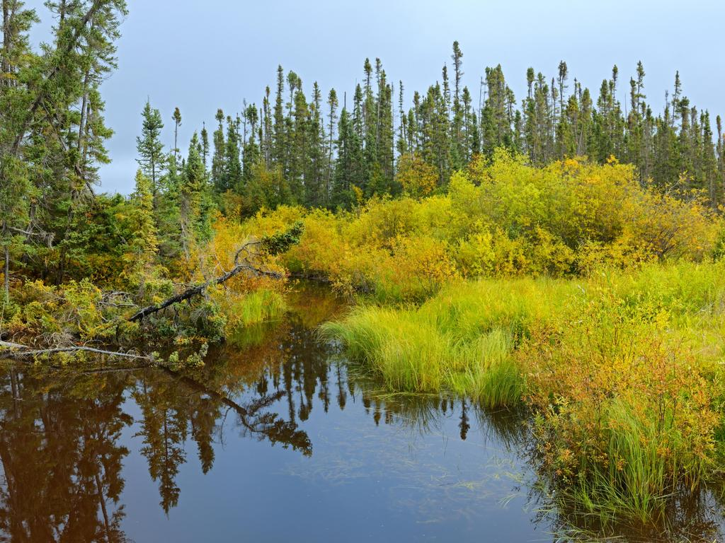 A wetland in the boreal forest on Gillam Road in Manitoba, Canada. Picture: Alamy