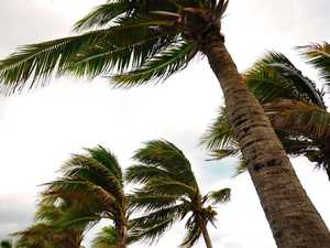 Harwood palm trees hide tragic tale